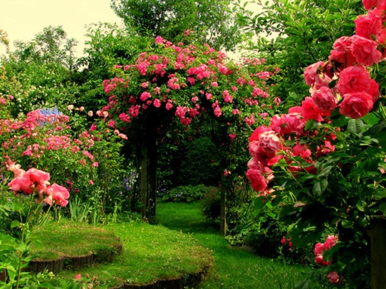 1427280483_flowers-at-Saputara